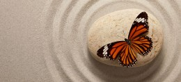 butterfly on sand
